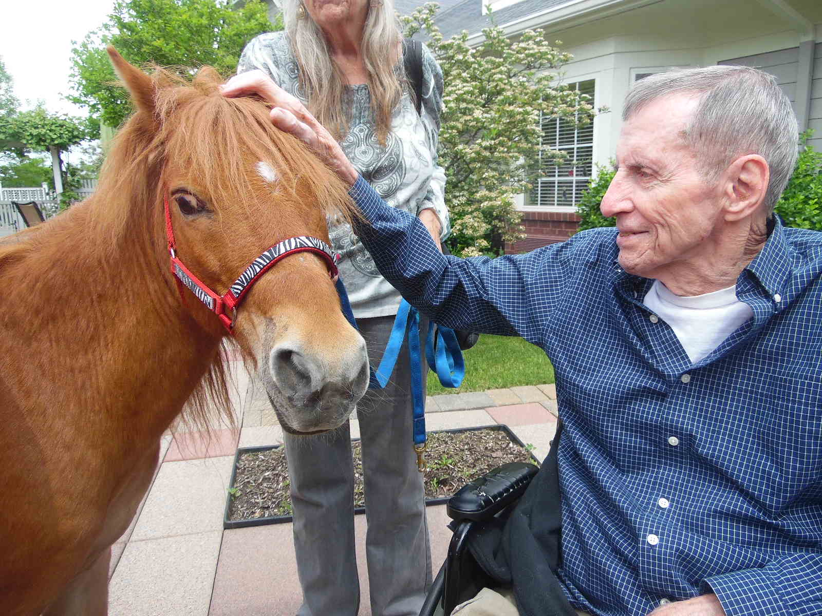 Animal Therapy with Horses