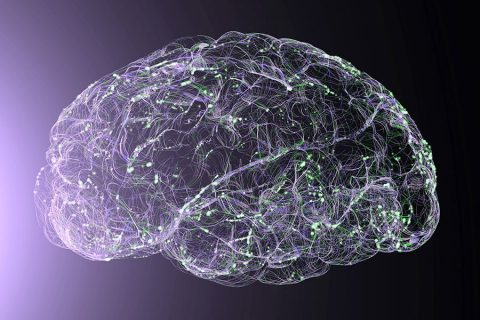 Illustration of a brain with outlines